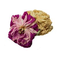Пион цветы сушеные